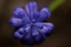 IMG_9507 (nitinpatel2) Tags: flower patel nitin