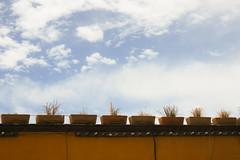 (Seel VP) Tags: sky naturaleza nature canon outside plantas exterior cielo sanmigueldeallende guanajuato gto macetas 2016 tarimoro