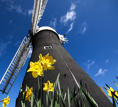 Holgate Windmill, York, Easter 2016 - 4 (nican45) Tags: york sky flower slr mill windmill canon easter march spring yorkshire sails sigma wideangle daffodil sail dslr 1020mm 1020 northyorkshire holgate fantail 2016 hwps 1020mmf456exdc holgatewindmill eos70d 25march2016 25032016