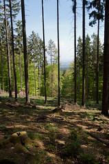 Aussicht (sduesterhus) Tags: plant tree nature forest landscape nikon view outdoor natur pflanzen aussicht landschaft wald spruce taunus baum fichte stamm hohemark goldgrube d5000