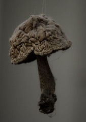 no time for mushrooms (Clara Goldberg) Tags: old mushroom dust pilze
