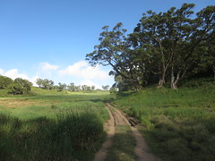 IMG_1058 (John Steedman) Tags: africa trek kenya afrika kenia afrique eastafrica mountkenya ostafrika     afriquedelest