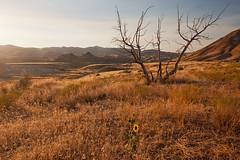 Golden Hour (Zack Mensinger) Tags: trip summer paintedhills nationalmonument oregontrip johnday 2015 johndayfossilbedsnationalmonument canon40d