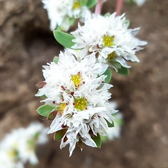 Beautiful in the Stone... (thedarkness741) Tags: new flores flower macro forest photography photo photographer flor may bosque campo mayo nuevo photooftheday flowes