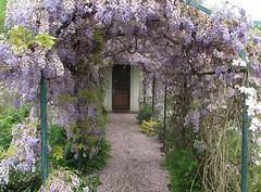 Tempo di glicini! Wisteria time! (Raffa2112) Tags: flowers primavera spring tunnel fiori galleria wisteria springtime pergola lilla glicini canonpowershotg10 raffa2112