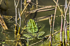 """froschgruen • <a style=""""font-size:0.8em;"""" href=""""http://www.flickr.com/photos/137809870@N02/26374388761/"""" target=""""_blank"""">View on Flickr</a>"""