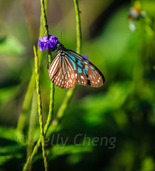Taiwan-121113-212 (Kelly Cheng) Tags: travel color colour green tourism nature animals horizontal fauna butterfly daylight colorful asia day taiwan vivid nobody nopeople colourful traveldestinations  northeastasia