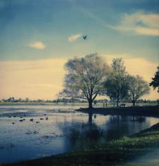 Lake Wendouree (Kat White) Tags: sunset lake film polaroid sx70 instant analogue ballarat impossible lakewendouree polaroidweek wendouree impossibleproject