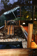 IMG_7772 (jalexartis) Tags: lighting nightphotography sun night dark outdoors aquarium outdoor aquatic basking aquatichabitat ybst yellowbelliedsliderturtles outdoorhabitat