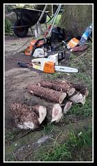 #stihl  ,  #trononneuse  ,  #chainsaw  ,  #kettingzaag  ,  #jardin  ,  #tuin  ,  #garden . (Eddy-Cambier) Tags: garden chainsaw jardin tuin stihl kettingzaag trononneuse