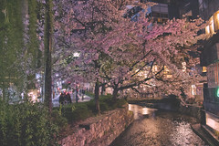 Kyoto by night (Enricodot ) Tags: street pink flowers light flower tree japan night japanese kyoto bynight cherrytree streetphotographer enricodot