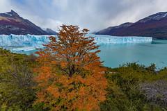 Glaciar Perito Moreno 4 (Jos M. Arboleda) Tags: patagonia santacruz argentina canon eos jose paisaje otoo 5d peritomoreno glaciar lagoargentino nevado elcalafate arboleda ef1740mmf4lusm josmarboledac marlkiii