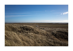 Up. Denmark (2016) (csinnbeck) Tags: road blue winter sky west nature up field grass vw volkswagen denmark coast countryside spring wind dunes horizon 28mm explore northsea fields gr roads ricoh ricohgr turbines 2016 vesterhavet explored inexplore marehalm