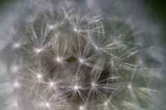 DSC00688_2 (Aaron Rebarchek) Tags: flowers macro nature spring helios 44m4 sonyalpha sonya7ii