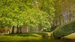green (Yasmine Hens) Tags: green europa flickr belgium ngc parc namur hens yasmine wallonie jardinsdannevoie iamflickr flickrunitedaward sonyilce7 hensyasmine