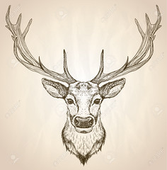 wood print (jitrive) Tags: wild portrait cute male art nature beautiful face fashion animal illustration pen ink paper poster mammal design sketch artwork funny pretty stag hand looking view graphic head drawing wildlife tail cartoon adorable horns tshirt front retro deer mature card trendy strong drawn powerful snout muzzle whitetail antler realistic hoofed