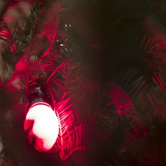 bulb. (bri— hefele) Tags: christmas tree bulb lights christmastree c9