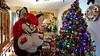 FOXY AGE 86 (aurorathelittlevixen) Tags: christmas sexy foxy furry aurora spencer fandom vixen selene fursuit garrido