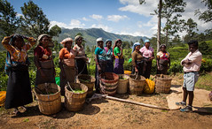 Tea Pickers - Dikoya , Srilanka (Wolfgang Krausse) Tags: tea srilanka tee té teapicker
