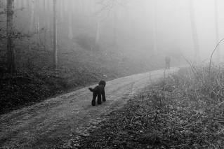 no desire to fog  (explored)