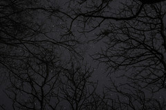 sky, once a place of gods (GeraldDeschain) Tags: trees blackandwhite moon plant tree monochrome night forest canon dark landscape 50mm outdoor no edited branches flash surreal ukraine gerald serene tangle darky chernivtsi 650d chernovtsy branchlet deschain canon650d canont4i geralddeschain