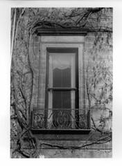 (alecanal93) Tags: blackandwhite plants white black texture film window darkroom 35mm canon print photography balcony bu bostonuniversity