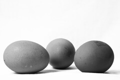 Eggs. (Aviator195) Tags: blackandwhite stilllife macro chicken monochrome closeup 50mm nikon focus egg monochromatic sharp eggs nikkor nikkorlens chickeneggs intereting d7100 nikond7100