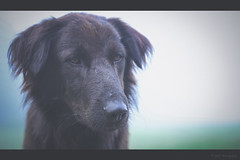 Spooky doggy (Sanz'Y) Tags: morning travel portrait dog colors beauty fog canon vintage scenery hills spooky faded kodaikanal sanzy