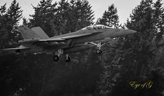 EA-18 Growler Below Tree Level.jpg (Eye of G Photography) Tags: trees sunset usa jets places whidbeyisland northamerica washingtonstate sunsetsunrise skyclouds touchandgo ea18growler olffield