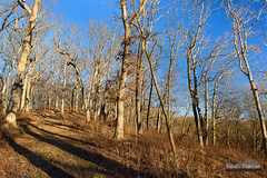 Siloam Springs Ridge (kevin-palmer) Tags: statepark blue trees winter sky forest illinois woodlands clayton hill january sunny ridge trail backpacking adamscounty circularpolarizer siloamsprings tamron2470mmf28 siloamspringsstatepark nikond750 redoakbackpacktrail