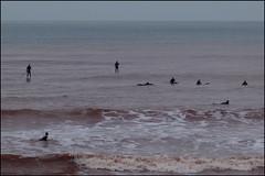 shoal of surfers (Philip Watson) Tags: sea seaside waves surfer devon sidmouth eastdevon