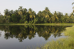 Kerala backwaters , South India (dirk huijssoon) Tags: india kerala palmtrees backwaters refelection