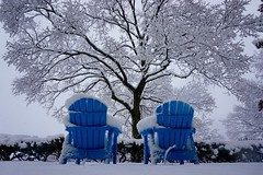Have A Seat In The Cold ((Jessica)) Tags: blue trees winter white snow storm tree weather boston chair seasons chairs seat massachusetts snowstorm newengland somerville tufts lexi medford blueandwhite pw lowangle lowperspective winterstormlexi