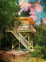 Lake Huron treehouse (eepeirson) Tags: ontario canada treehouse brucepeninsula lakehuron sincity txeeppicmonkey