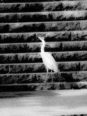 Shashin - DSCN3333 (Mathieu Perron) Tags: life city bridge people bw white black monochrome japan nikon kyoto noir perron daily nb journey jp   mp blanc japon personne ville gens vie mathieu   sjour   quotidienne        p520  zheld