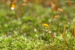 Droplet (Darea62) Tags: grass rain moss stem bokeh droplet