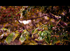 Fall Magnolia Berries (Photographybyjw) Tags: autumn green fall colors sunshine rural gold for spring berries north carolina magnolia ready getting photographybyjw