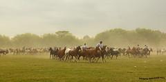 Tropilla 3 (pniselba) Tags: horse criollo caballo buenosaires campo gaucho tradicion provinciadebuenosaires sanantoniodeareco areco tropilla diadelatradicion