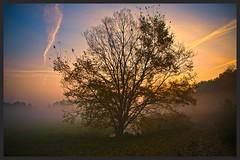 morgens in Mecklenburg (NPPhotographie) Tags: morning sun mist art nature fog sunrise magic creative dust magical oberberg npp