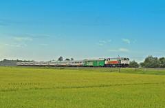 Kereta Api Bangunkarta (Wahyu Dewantara) Tags: sawah keretaapiindonesia keretaapikita keretaapibangunkarta