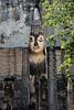_GRL7728 (TC Yuen) Tags: architecture thailand ruins asia southeastasia buddha unesco worldheritage norththailand ancientcapital