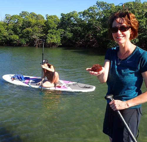 2_17_16 Kayak Paddleboard Tour Sarasota FL 24