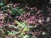 61/366 Details (JessicaBelotto) Tags: flower macro planta nature de photo foto ar details natureza flor rosa days cobweb honey ao fotografia projeto tangle livre detalhe subtle fotográfico aranha galho teia folhagem 366 sutil emaranhado enredado desabrochar 366daysofhoney 366diasnoano
