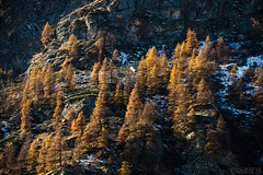 Formaggino Autunnale #32 ( YariGhidone ) Tags: life autumn mountain nature way stars landscape colours outdoor via val milky colori paesaggi montagna refuge conca stelle bivvy bivacco formaggino prali lattea germanasca cialancia