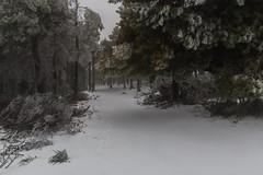 Nieva en La Cumbre de Gran Canaria Febrero 2016  (Carretera Cazadores - Telde) 19/02/2016 (El Coleccionista de Instantes) Tags: en de la nieve nevada gran febrero con 2016 nieva canariala canarianieve canariafotos canariasnieve cumbreinvierno temporaldenieveengrancanaria nievaengrancanaria lasmejoresfotosdelanieveengrancanaria caenieveengrancanaria nieveenlacumbredegrancanaria lagrannevadadefebrero2016engrancanaria nevadadefebrero2016grancanaria canariaimagenes