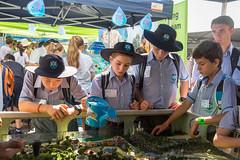 Learning about catchments (Brisbane City Council) Tags: people kids children schoolchildren kgs stalls schooluniform kinggeorgesquare greenheart worldsciencefestival schoolagechildren greenheartschools