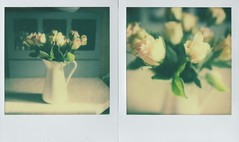 a gesture of appreciation (elin*) Tags: roses slr polaroid sx70 diptych impossibleprojectcolourfilm roidweek2016