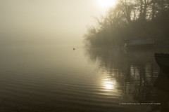 Lonesome Duck (The Original Happy Snapper) Tags: morning trees sunlight mist water fog sunrise landscape boat duck outdoor earlymorning ripples rays morningdew sunsrays refelection