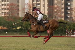 Gallop (imtiazchaudhry) Tags: grass sport pony mallet rider polo equestrian gallop hooves