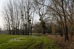 DSCF0560 (kuzdra) Tags: france spring village anjou   dene